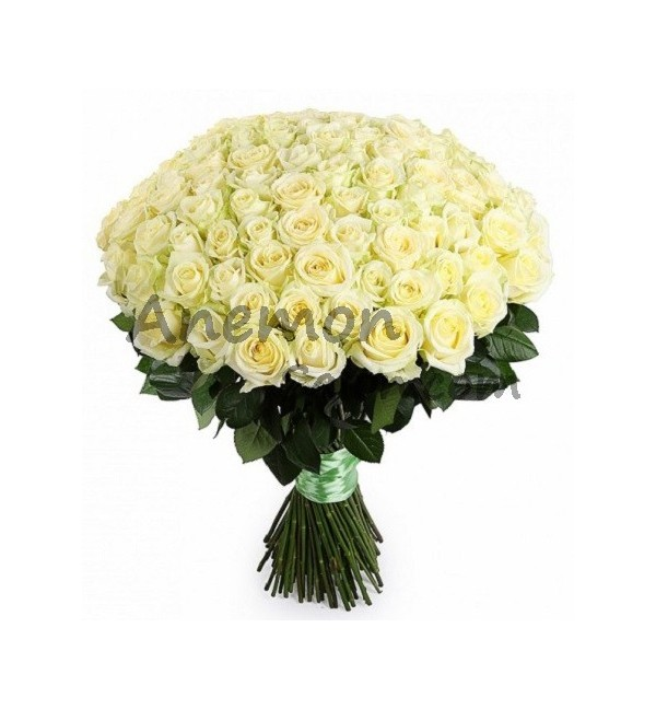 101 white elegant roses delivery in yerevan is free 101 white roses loading zoom mightylinksfo