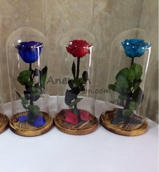 Enchanted Rose-005